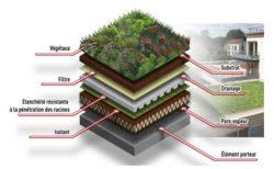 Composition d'un toit vegétalise