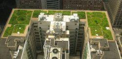 immeuble avec toiture vegetalisee