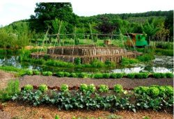 permaculture culture dans le milieu naturel originel
