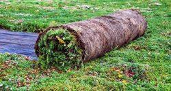 tapis pre-vegétalise