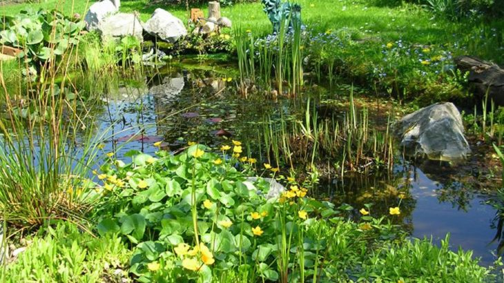 Phytoépuration creer un filtre plante