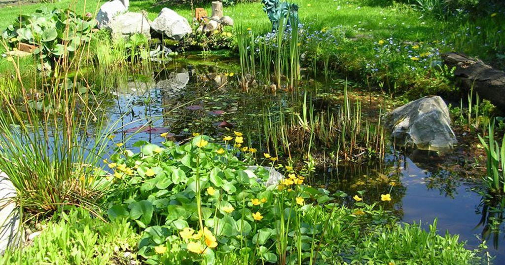 plante aquatique pour depolluer l eau