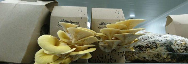 Une-cultiver ses champignons a la maison