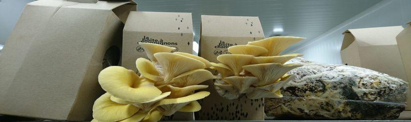 Cultiver ses champignons la maison build green - Cultiver des champignons de paris a la maison ...
