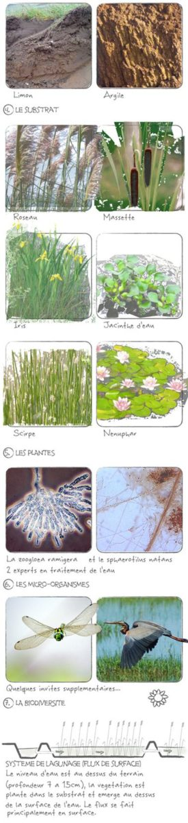 substrat & ecosysteme phyto-epuration