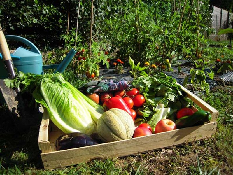 jardinier et le proprietaire vont se partager les recoltes