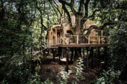 Cabane arbre dans la végétation - Woodman-Treehouse par Mallinson-BEaM-studio - Angleterre