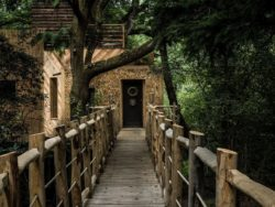 Pont suspendu en bois - Woodman-Treehouse par Mallinson-BEaM-studio - Angleterre