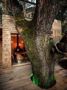 Terrasse bois et tronc d'arbre - Woodman-Treehouse par Mallinson-BEaM-studio - Angleterre