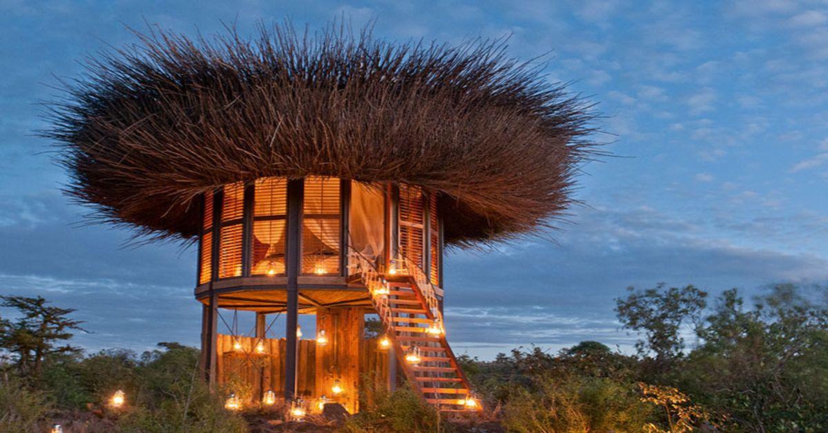 Dormir sous le nid d 39 un oiseau au kenya build green for Nid d oiseau sous toiture