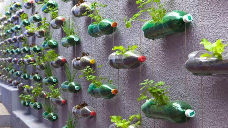 Recycler des bouteilles plastiques en mur vegetal