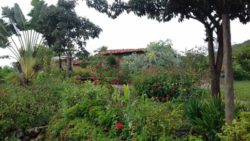 Jardin autour du site - House-Ibicoara par Auwaearth - Ibicoara, Bresil © Auwaearth
