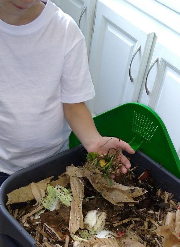 Plus2Vers pour le compost © mypositiveimpact