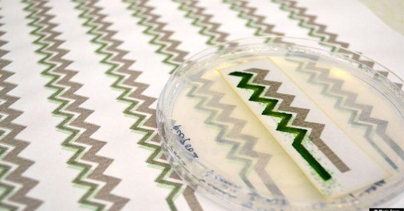 papier peint a recuperation e jet d'encre et cyanobacteries-1 © Imperial College London