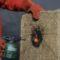 Une - Matelas-Radiculaire par Rootman - Chili © Rootman