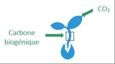 phenomene-photosynthese