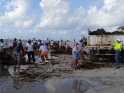 Nettoyage algues côte - House-Seaweed par Vazquez Sanchez - Puerto Morelos, Mexique © Pilar Rodriguez Rascon