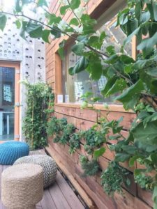 Terrasse avec plantes aquaponiques - Prototype-Baitikool-Solar-Decathlon