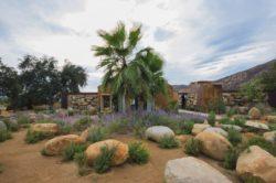 jardin - House 8 par TAC Taller - Mexique, Vallee de Guadalupe © Humberto Romero