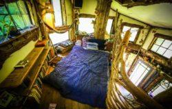 Chambre et ouvertures vitrées - Fame-Forest par Snoopy - © livingbiginatinyhouse