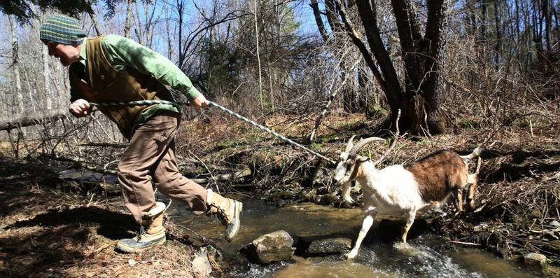 Elevage des chèvres - Possiblity-Alliance par Sarah-Ethan - Maine, USA © naturalbuildingblog