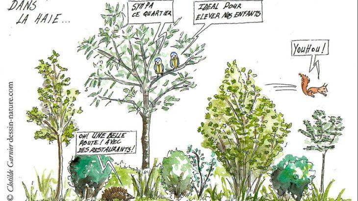 Objectif-biodiversite-pour-les-Haie-Donneurs