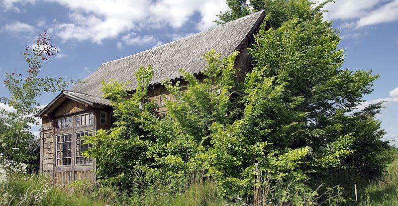 Tailler et rabattre les arbres bordant les toits-01