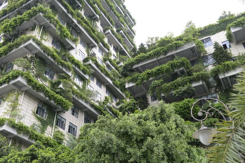 vegetalisation facade urbain - 02