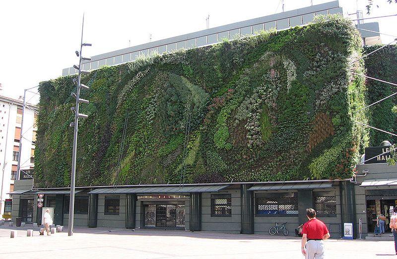 vegetation paroi verticale mur - 04