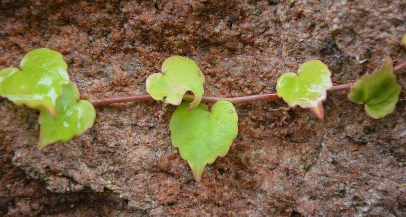 leaves-2835620_JACLOU-DL
