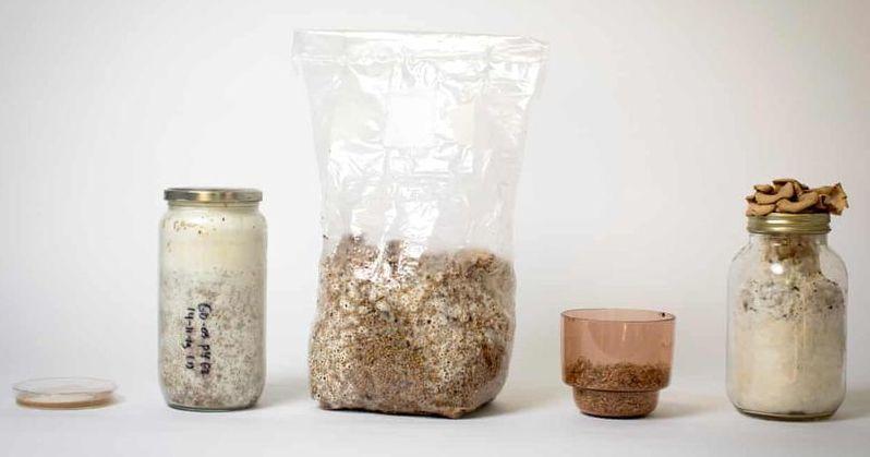 elements-de-croissance-du-mycelium