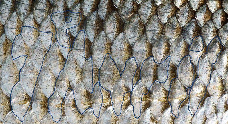 ecailles de poisson-04