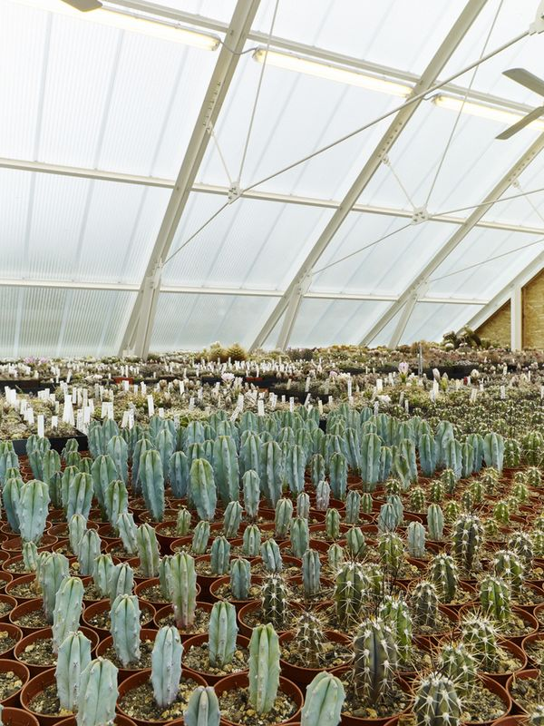 14- Family-Greenhouse par RicharDavidArchitekti - Horice, Republique Tcheque